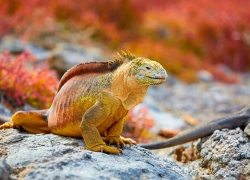 G ADVENTURES - GALAPAGOS SOUTH