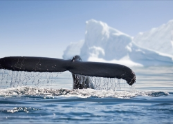 G ADVENTURES - EXPEDITION ANTARCTICA