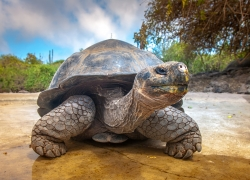 G ADVENTURES - GALAPAGOS NORTH
