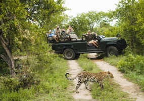 GREATER KRUGER SAFARI