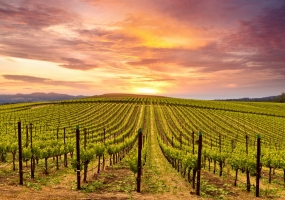 CALIFORNIA FOOD AND WINE TOUR