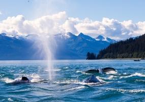 REGENT CRUISE - ALASKA